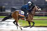 November 1, 2018: Smart Choice (ARG), trained by Todd A. Pletcher, exercises in preparation for the Breeders' Cup Filly & Mare Turf at Churchill Downs on November 1, 2018 in Louisville, Kentucky. Alex Evers/Eclipse Sportswire/CSM