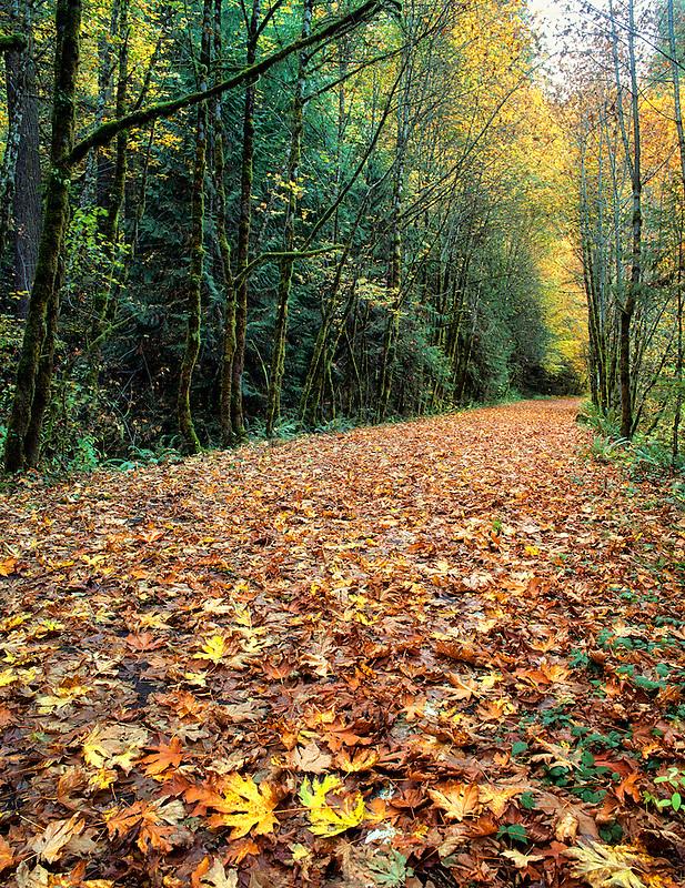 Road covered in fall color. Near Oakridge, Oregon.