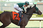 HOT SPRINGS, AR - MARCH 17: Martini Glass #7 with jockey Paco Lopez aboard after crossing the finish line in  the Azeri Stakes at Oaklawn Park on March 19, 2018 in Hot Springs, Arkansas. (Photo by Justin Manning/Eclipse Sportswire/Getty Images)