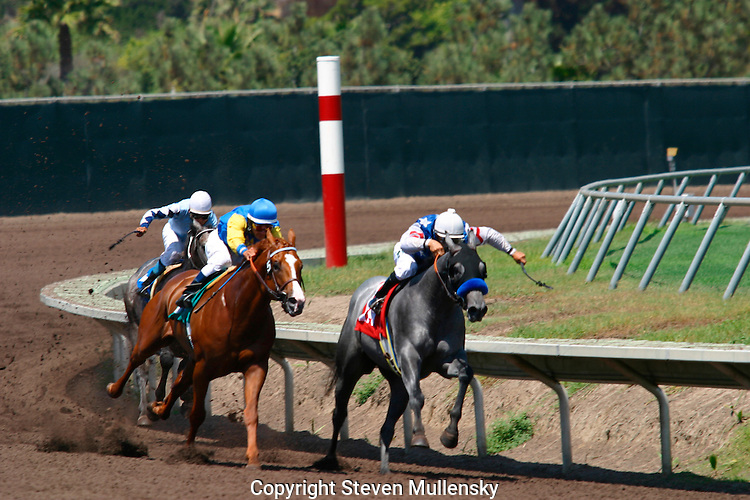 Thoroughbreds round the clubhouse turn during a race at the Del Mar Racetrack in Del Mar, California.