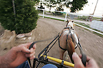 CHAD PILSTER •Hays Daily News<br /> <br /> Joe Schueler, a volunteer, drives a cart lead by a miniature horse on Monday, June 3, 2013, at the Blue Sky Miniature Horse Farm in Hays, Kansas. The farm has some of the smallest horses in Kansas.