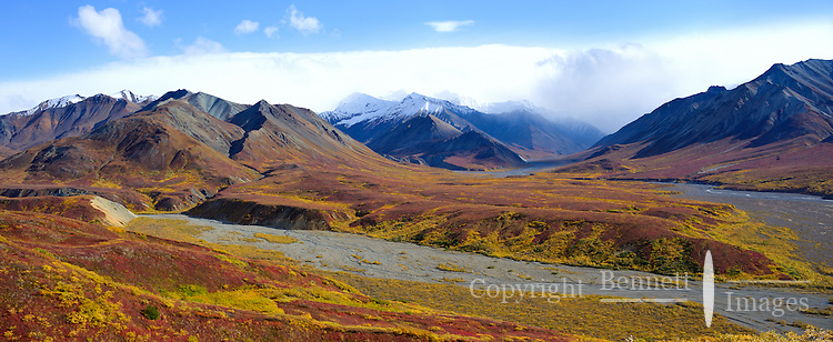 Denali National Park and Preserve is spectacular in mid-September, with the mountains and valleys decorated in fall colors of red and yellow, and the many wild creatures sporting full coats as they head into winter.