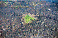 Forest fire burn scar with aspen island.  West Fork Complex fire, Colorado.  July 2013
