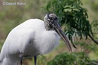 0111-0966  Wood Stork, Detail of Head and Beak, Mycteria americana  © David Kuhn/Dwight Kuhn Photography