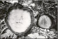 Cut logs<br />