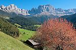 Italy, South Tyrol, Alto Adige, Dolomites, near San Cipriano: autumn scenery with Catinaccio, Torri del Vajolet and Cima di Antermoia mountains | Italien, Suedtirol, Dolomiten, bei St. Zyprian: Herbstlandschaft mit Rosengarten, Vajolettuerme und Keselkogel