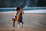 Jackie'S Warrior, trained by Steven M. Asmussen, exercises in preparation for the Breeders' Cup Juvenile at Keeneland 10.30.20