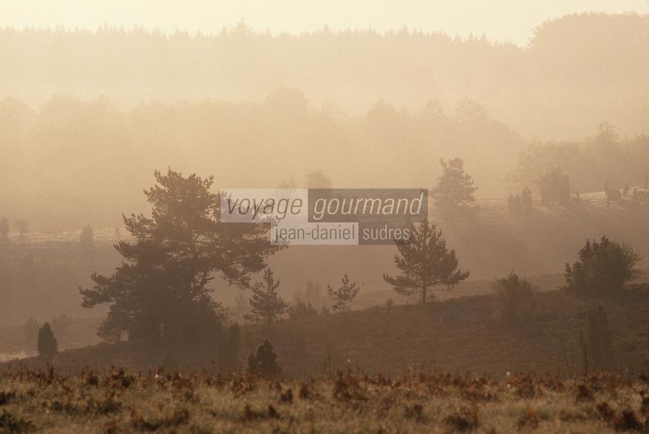 Europe/France/Limousin/23/Creuse/Plateau de Gentioux: Brûmes matinales