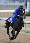 3 November 2010: Miss Keller (IRE), trained by Roger L. Attfield and to be ridden by jockey Javier Castellano, works out for the 2010 Breeders Cup at Churchill Downs in Louisville, Kentucky.(Scott Serio/Eclipse Sportswire)