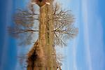 Europa, DEU, Deutschland, Baden-Wuerttemberg, Schwaebische Alb, Herbrechtingen, Naturschutzgebiet Eselsburger Tal, Fluss Brenz, Tpische Landschaft, Natur, Umwelt, Landschaft, Jahreszeiten, Stimmungen, Landschaftsfotografie, Landschaften, Landschaftsphoto, Landschaftsphotographie, Wetter, Wetterelemente, Wetterlage, Wetterkunde, Witterung, Witterungsbedingungen, Wettererscheinungen, Meteorologie, Wettervorhersage, <br /> <br /> [Fuer die Nutzung gelten die jeweils gueltigen Allgemeinen Liefer-und Geschaeftsbedingungen. Nutzung nur gegen Verwendungsmeldung und Nachweis. Download der AGB unter http://www.image-box.com oder werden auf Anfrage zugesendet. Freigabe ist vorher erforderlich. Jede Nutzung des Fotos ist honorarpflichtig gemaess derzeit gueltiger MFM Liste - Kontakt, Uwe Schmid-Fotografie, Duisburg, Tel. (+49).2065.677997, ..archiv@image-box.com, www.image-box.com]