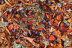 Coiled and camouflaged in the leaf litter, hidden by its beautiful colors and patterns, a venomous Puff Adder awaits the close passage of its next unsuspecting meal in Altai, Morocco.