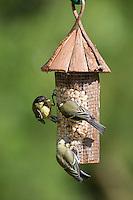 Kohlmeise, an der Vogelfütterung, Erdnüsse, Kohl-Meise, Meise, Parus major, great tit. Ganzjahresfütterung, Vögel füttern im ganzen Jahr, Vogelfutter der Firma GEVO, Erdnussstation, Erdnußstation