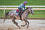 October 28, 2015 :   Holy Lute, trained by James M. Cassidy and owned by Class Racing Stable, exercises in preparation for the Breeders' Cup Sprint at Keeneland Race Track in Lexington, Kentucky on October 28, 2015. Scott Serio/ESW/CSM
