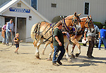 Young boy driving a team of draft horses at Cheshire Fair in Swanzey, New Hampshire USA