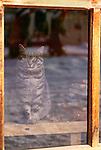 Domestic cat, Ainu village, Hokkaido, Japan