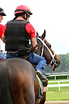 June 4, 2014: Ride On Curlin Belmont Stakes contender morning works at Belmont. Sue Kawczynski/ESW/CSM