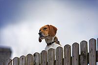 2021 03 25 Easing down of lockdown rules, Rhayader, Wales, UK