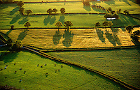 © David Paterson.Cattle graze in evening light in the Onny Valley, west Shropshire, England...Keywords: cattle, livestock, graze, pasture, evening, shadows, farming, agriculture, fields, Onny, Shropshire, England, quiet, peaceful, tranquil