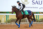 RIYADH, SA February 19 2021: MISHRIFF (IRE) Track work from King Abddulaziz Racetrack, Riyadh, Saudi Arabia. Shamela Hanley/Eclipse Sportswire/CSM