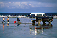 Haida Gwaii (Queen Charlotte Islands), Northern BC, British Columbia, Canada - People digging for Clams beside Vehicle, on North Beach along McIntyre Bay, Naikoon Provincial Park, Graham Island
