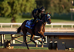 OCT 29: Breeders' Cup Juvenile  entrant Storm the Court, trained by Peter A. Eurton,  at Santa Anita Park in Arcadia, California on Oct 29, 2019. Evers/Eclipse Sportswire/Breeders' Cup
