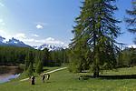 Paturages en  fleurs près du lac de Roue(2695 m) entre Arvieux et Chateau Queyras<br /> Flowered high mountain pasture nearby Roue lake between Arvieux valley and Chateau Queyras valley