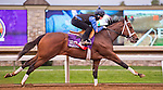 October 26, 2015 :  Favorite Tale, trained by Guadalupe Preciado and owned by PJG Stable, exercises in preparation for the Breeders' Cup Sprint at Keeneland Race Track in Lexington, Kentucky on October 26, 2015. Scott Serio/ESW/CSM