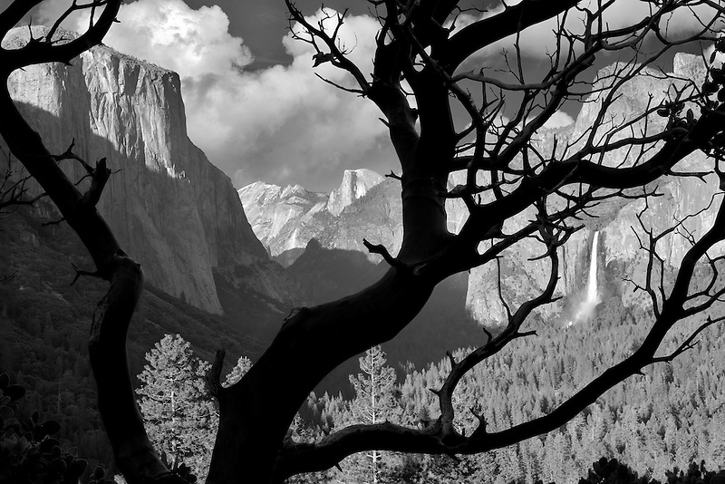 Yosemite Valley view from above Tunnel View Overlook as seen through manzanita bush.  Yosemite National Park, California (clouds have been added)