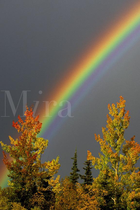 Fall Rainbow.  Alaska.