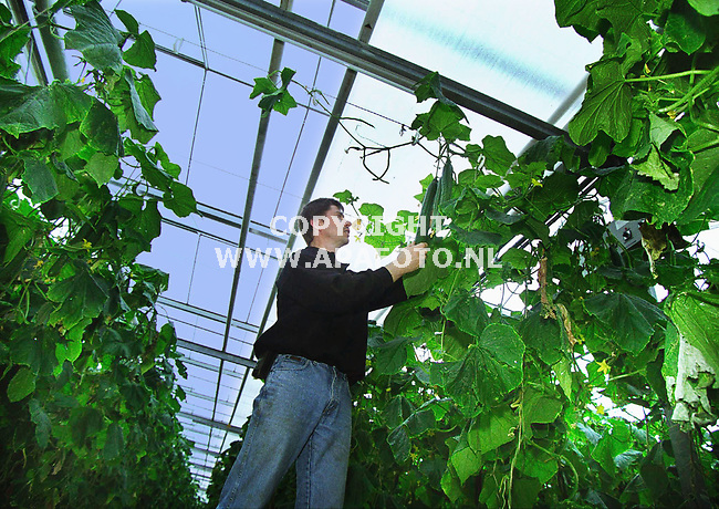 Loo . 140400   Foto : Koos Groenewold / APA foto<br />Toon van Sadelhof bij kommmers en scherm.   de  <br /><br />DE LUCHT BIJ DEZE FOTO IS BLAUW GEMAAKT , OMDAT HET SCHERM ANDERS VRIJWEL NIET ZICHTBAAR IS . ZIE OOK DE ` GEWONE FOTO`<br /><br />glas 5   19  x4/5  komkommer apa/koos groenewold