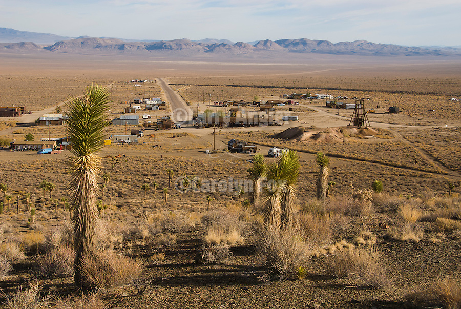 Townsite and the Lida Valley; joshua trees