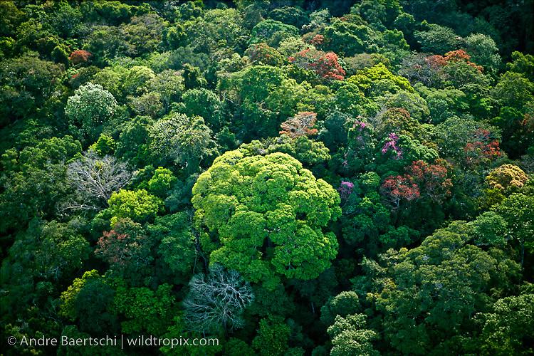 Aerial view of lowland tropical rainforest canopy along the Rio Tuichi, Madidi National Park, La Paz, Bolivia.
