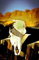 Skull on Old Shack - Arizona<br /> Old Tucson Movie Studio, Tucson<br /> All Rights Reserved