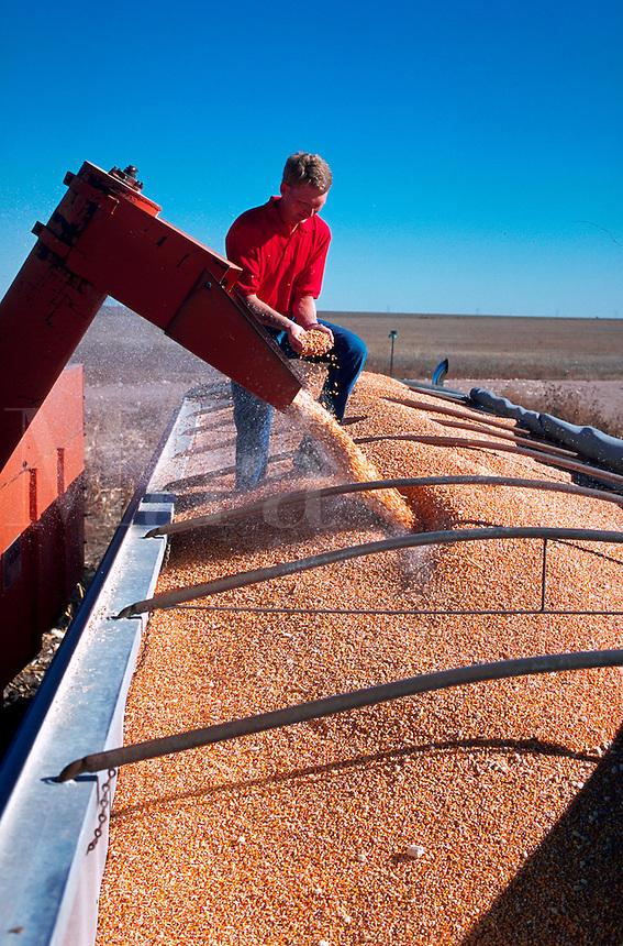 Farmer overseeing corn harvest in Colorado.
