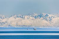 Oil drilling platforms in the Cook Inlet near Anchorage, Alaska. Aleutian mountain range, Alaska Peninsula, southcentral, Alaska.