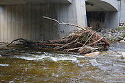 Debris build up along the East Branch of the Pemigewasset River at the Route 112 bridge in Lincoln, New Hampshire from Tropical Storm Irene in 2011. This tropical storm caused major destruction along the East Coast of the United States and the White Mountain National Forest was officially closed during the storm.