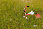 A lonely discarded tricycle in the village of Tasiussaq, Greenland.