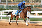 RIYADH, SA February 19 2021: GLORIOUS JOURNEY (GB) Track work from King Abddulaziz Racetrack, Riyadh, Saudi Arabia. Shamela Hanley/Eclipse Sportswire/CSM