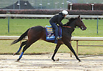 Drill , trained by Bob Baffert and to be ridden by Martin Garcia , exercises in preparation for the 2011 Breeders' Cup at Churchill Downs on  November 4, 2011.