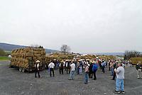 Auktion: AMERIKA, VEREINIGTE STAATEN VON AMERIKA,PENNSYLVANIA,  (AMERICA, UNITED STATES OF AMERICA), 12.04.2006: Auktion von Futtermittel in der Kleinstadt Bellville. Amisch Leute und Buerger mischen sich hier als Kunden. Versteigerung, Stoh, Heu, .