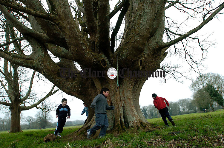 Boys make their own fun under a huge old tree on the O Halloran farm in Kilkishen during the Clare Cross Country Championships. Photograph by John Kelly.