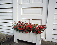 White-painted wooden house-front with tub of red geraniums at Solvorn village, Lustrefjord, Norwa