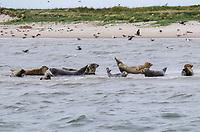 Seehundbänke vor Juist - Norddeich 23.07.2020: Fahrt mit der Nordmeer zu den Seehundbänken