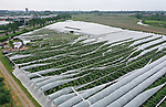 Foto: VidiPhoto<br /> <br /> DRUMPT – Fruittelers in de regio Tiel maken zaterdag de schade op na de orkaan en allesverwoestende hagelbui van vrijdagmiddag. Niet alleen zijn veel bomen beschadigd, maar zo'n 60 ha. aan hardfruit en 10 ha. aan kersen en aardbeien is volledig vernietigd. Bij de kersen was de oogst net begonnen. De Nederlandse Fruittelers Organisatie schat de schade in de Betuwe op enkele miljoenen euro's. Bij sommige telers is de complete oogst verwoest. Foto: Bij fruitteler Arie van Ojen uit Zoelen is niet alleen het fruit verwoest, maar zijn ook zijn kappen kapotgewaaid.