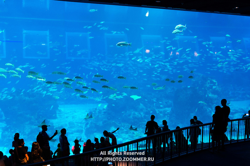 School of fish in panoramic marine panel at Aquarium, Sentosa, Singapore