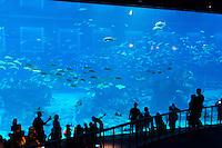 School of fish in panoramic marine panel at Aquarium, Sentosa, Singapore