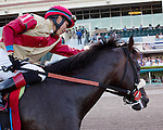 HALLANDALE BEACH, FL - FEBRUARY 25: #1 Unified with Jose Ortiz up after winning the Gulfstream Park Sprint (G3) at Gulfstream Park, Hallandale Beach, FL. (Photo by Arron Haggart/Eclipse Sportswire/Getty Images)