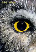 OW11-022z  Saw-whet owl - close up of eye - Aegolius acadicus
