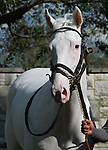 14 October.  Patchen Princess, a rare white thoroughbred ran in the 6th race at Keeneland, 2 year old Maiden, gaining attention from many spectators who commented on her unique color.