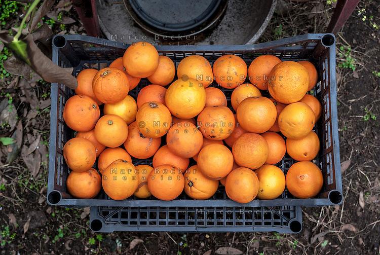Cassetta di arance --- Orange crate